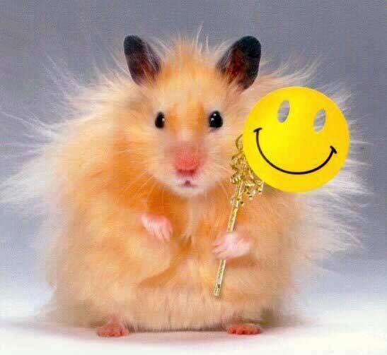 happyhamster