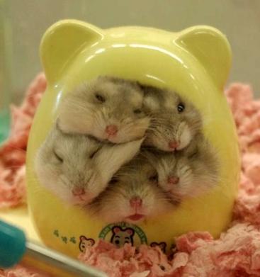 Harmonious Hamsters