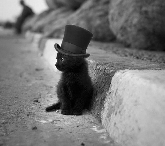 black-cat-with a black hat