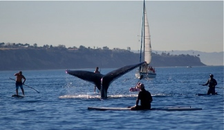 Redondo Gray Whales