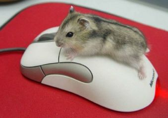 A Mind-boggling Mouse