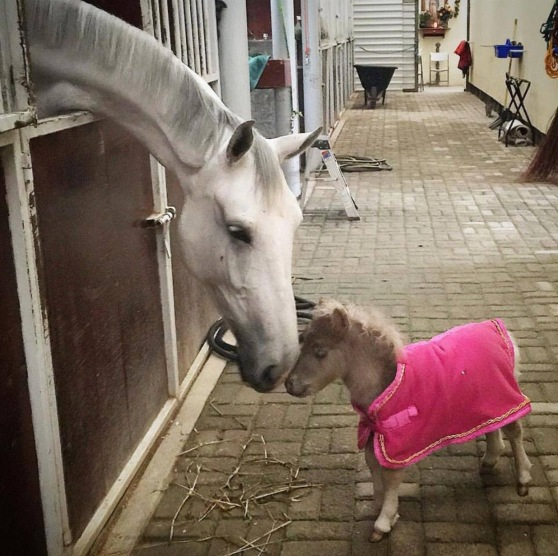 Friends Come in All Sizes