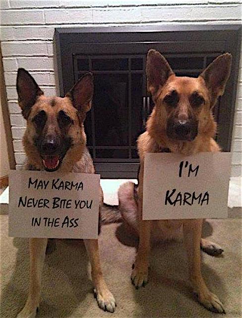 Meet Karma