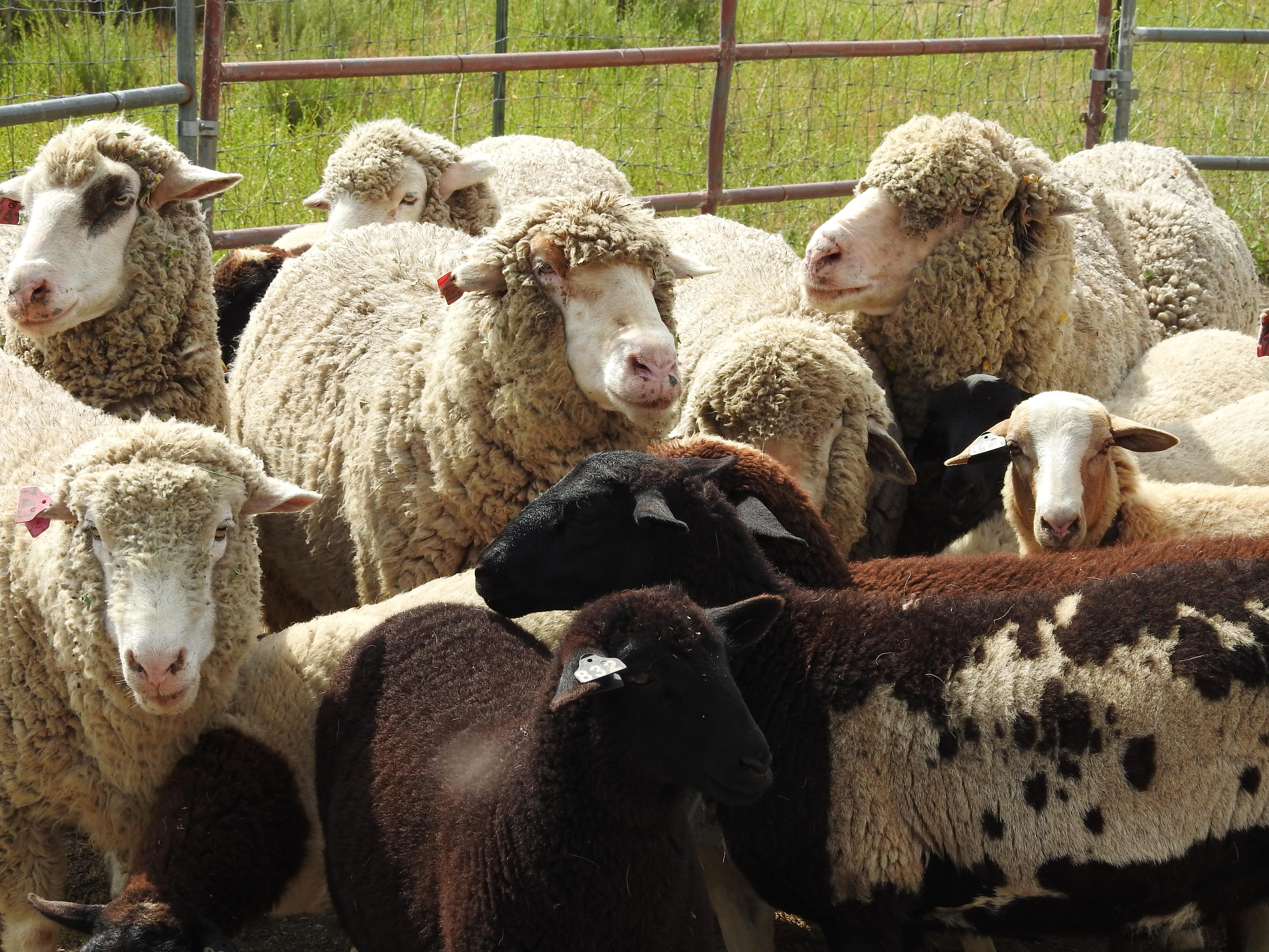 On the Lamb