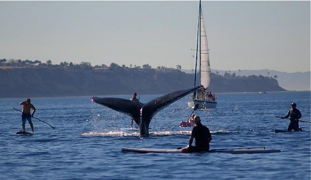 redondo-gray-whales