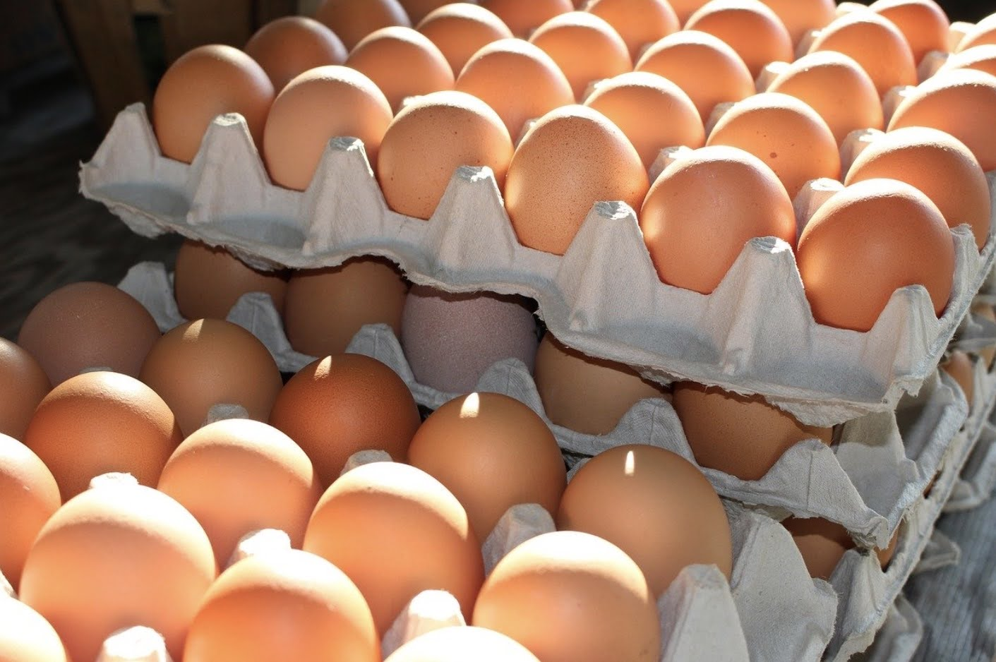 Exceptional Eggs