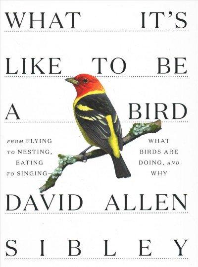 Birdman of the New Millennium